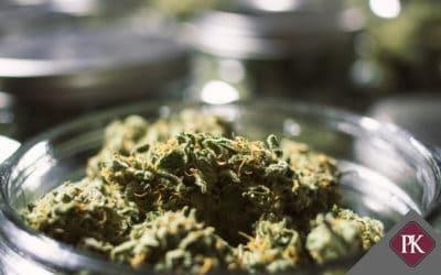 The New Marijuana Industry in Arizona